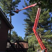 Turgeon Tree Removal