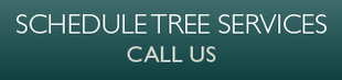 Schedule Tree Services | Call Us